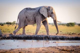 pexels-photo-38139-elephant