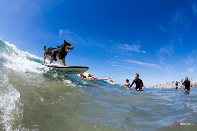 Surfing Classes Huntington Beach