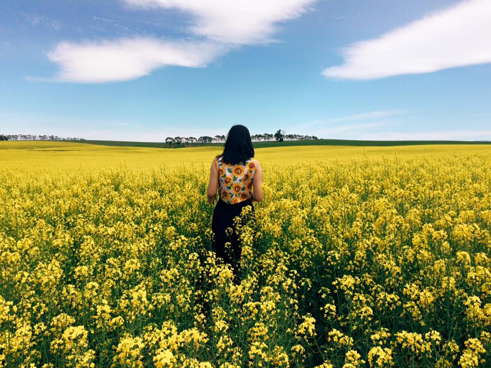These amazing yellow fields are what instagram dreams are made of mightylinksfo