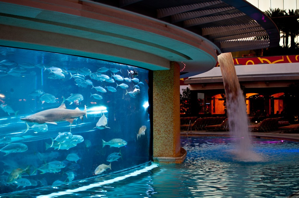 You Can Water Slide Right Through A Shark Tank At This Hotel
