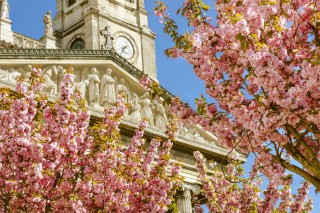 Check out out best tips to shoot Paris in the Springtime. www.parisphotographytours.com/blog.html