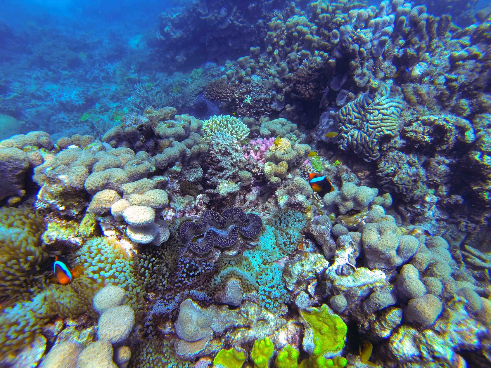 a story of my trip to the great reef barrier Evidence that australia's great barrier reef is experiencing its great barrier reef hit by 'worst' bleaching saddest research trip of my life.