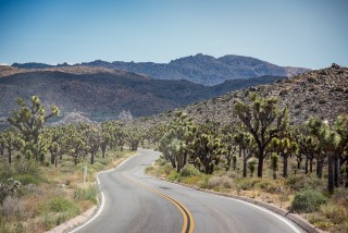 JoshuaTree_California_USA_DominicLoneragan_MeghanLoneragan_080516_0192_forweb_awol