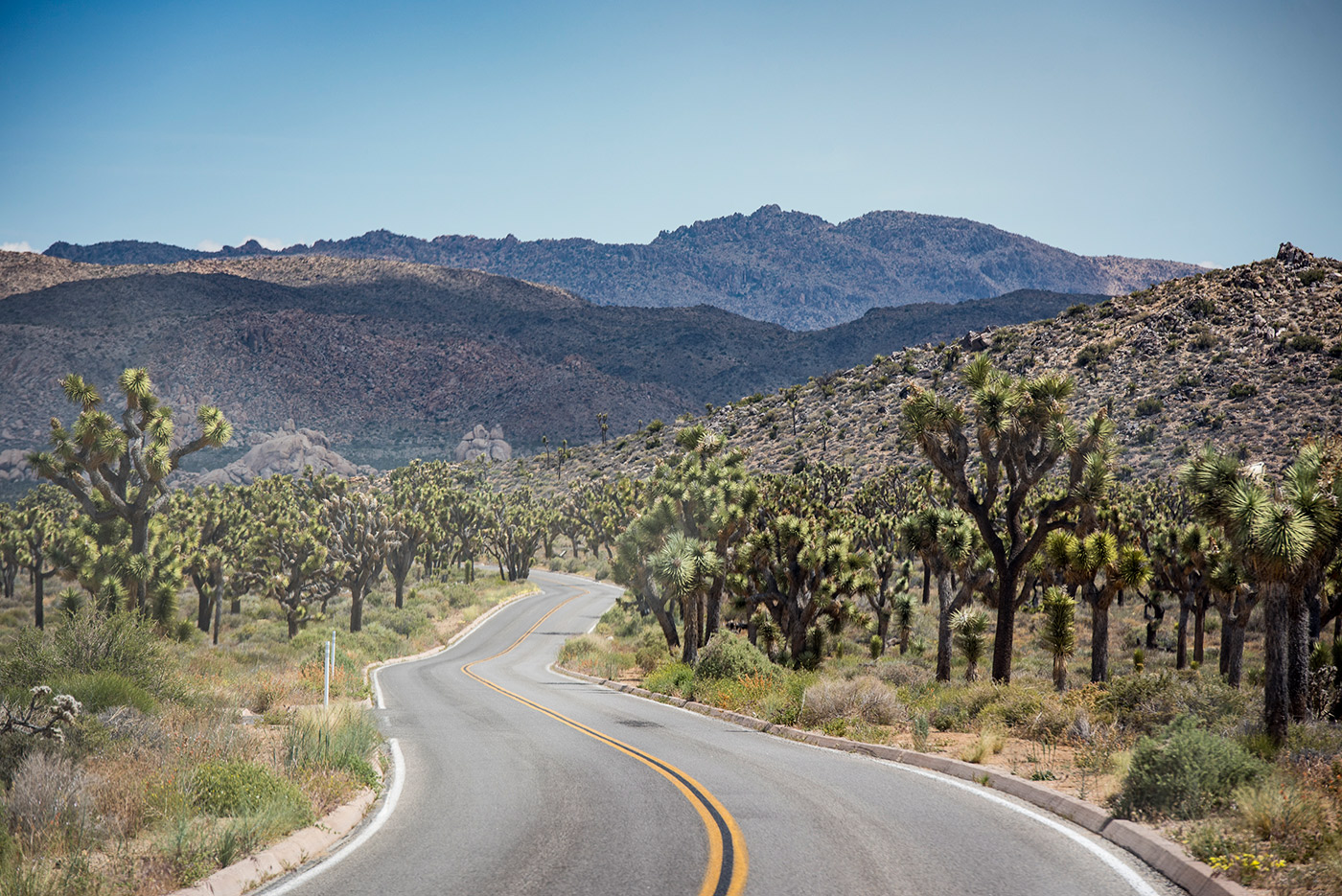 Camping Joshua Tree California Here S Your 5 Step Guide