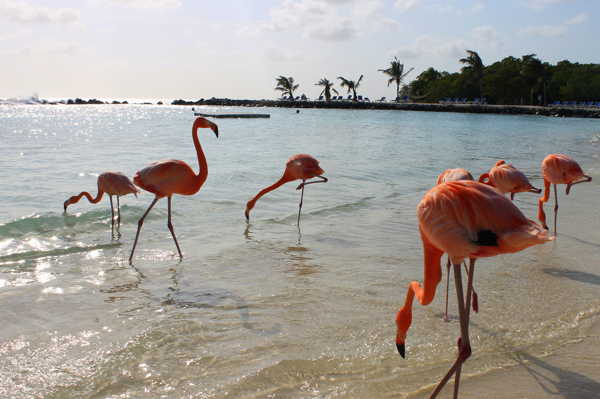 You Can Swim With Real-Life Flamingos At This Secluded ...