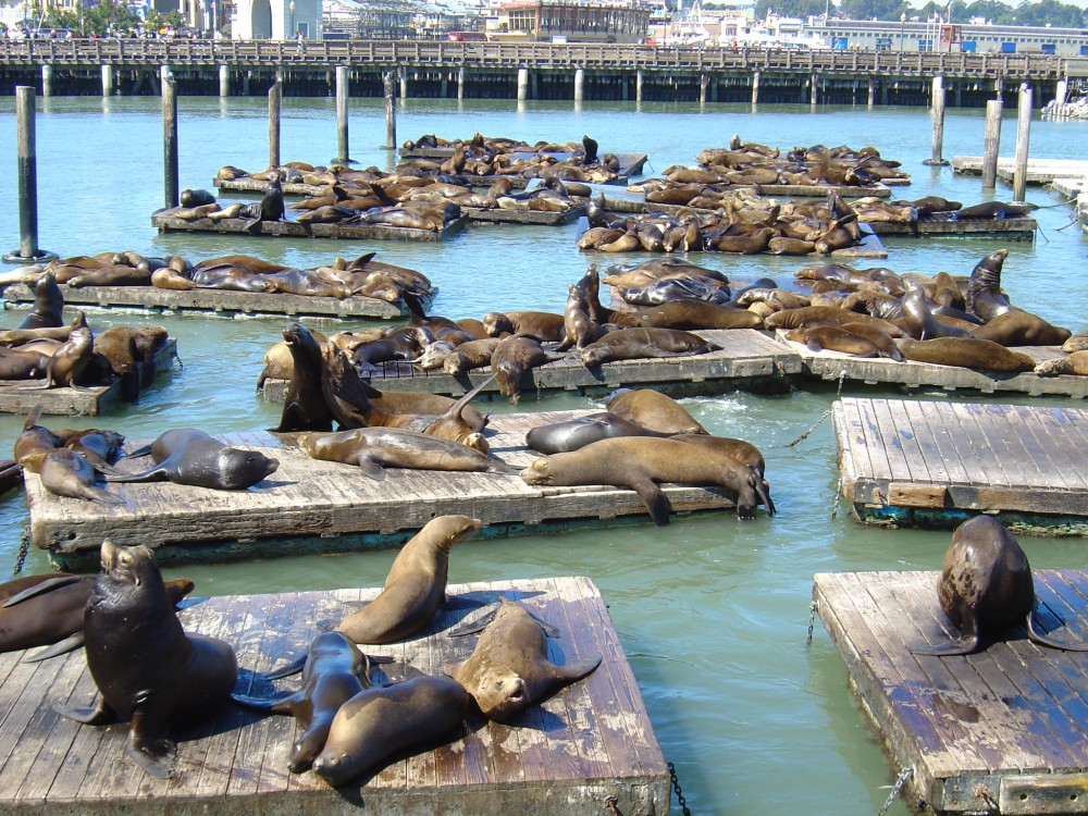 9 Things All First-Timers Should Do In San Francisco