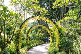 Singapore_BotanicGardens_SSHProducts_CitizensoftheWorld_DominicLoneraganPhotography_MeghanMcTavish_TravelPhotography_170216_0033 (1)