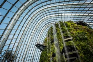 Singapore_GardensByTheBay_SSHProducts_CitizensoftheWorld_DominicLoneraganPhotography_MeghanMcTavish_TravelPhotography_150216_0009