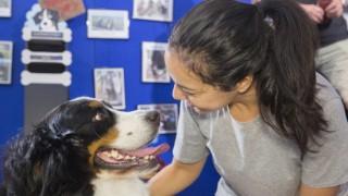 dog show 4