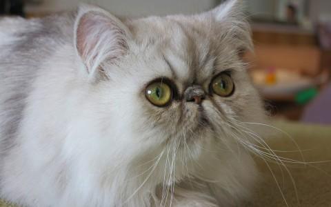 Cats Meow Cafe Menu