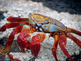 crab-animal-aquatic-archipelago-59809
