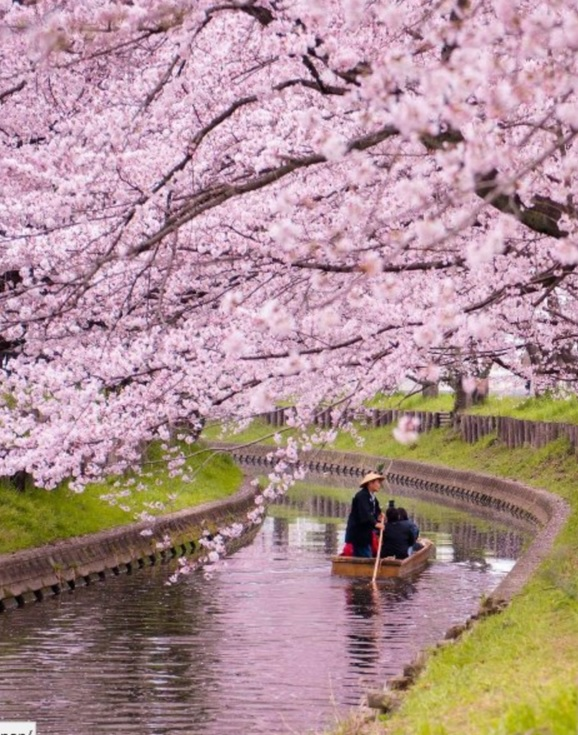 10 Photos That Perfectly Capture How Stunning Japan S Cherry Blossom