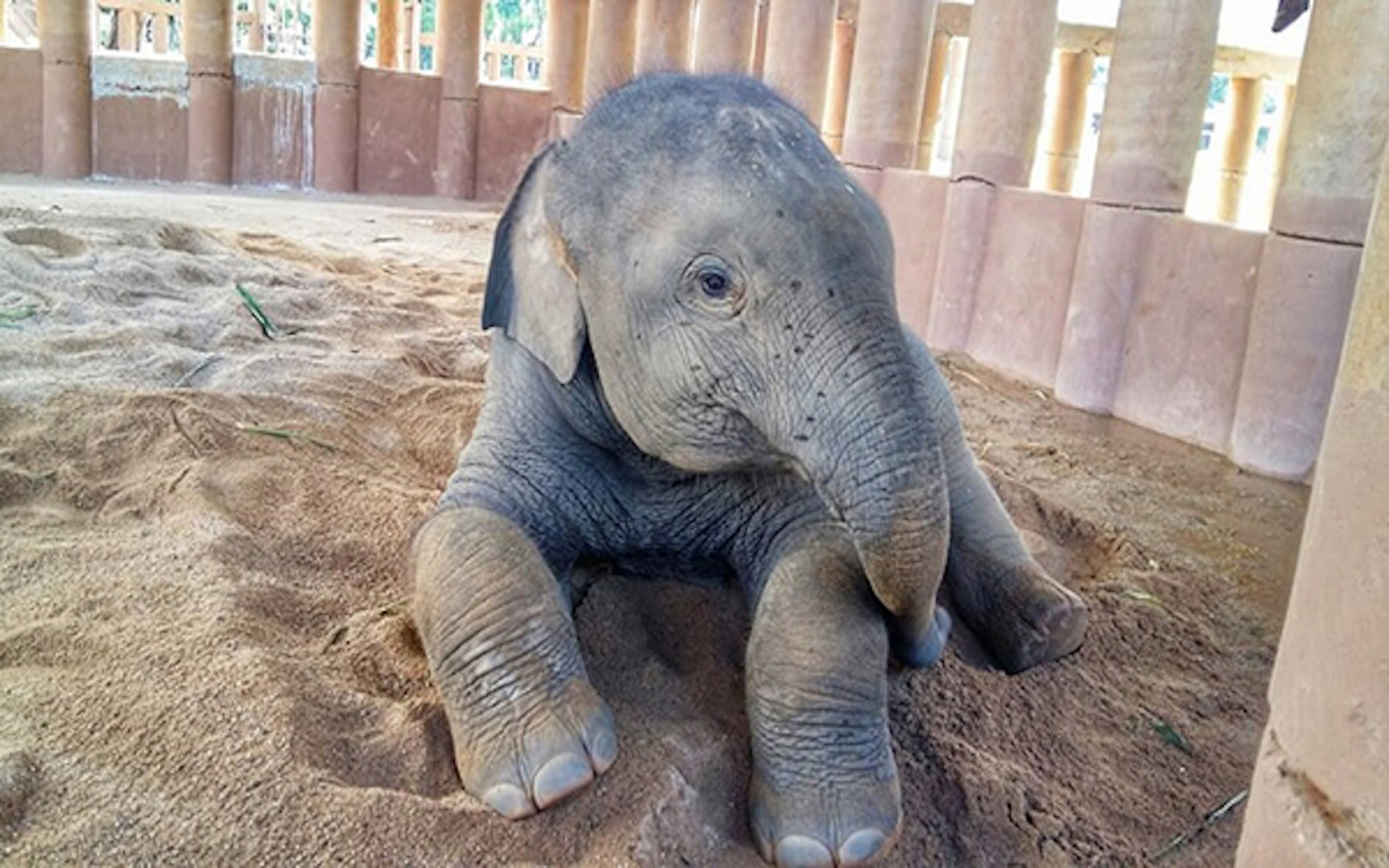 This video of a baby elephant meeting his new family is - Babyzimmer elefant ...