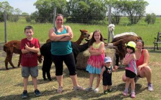 Alpaca dance classes at 313 Farms Manitoba