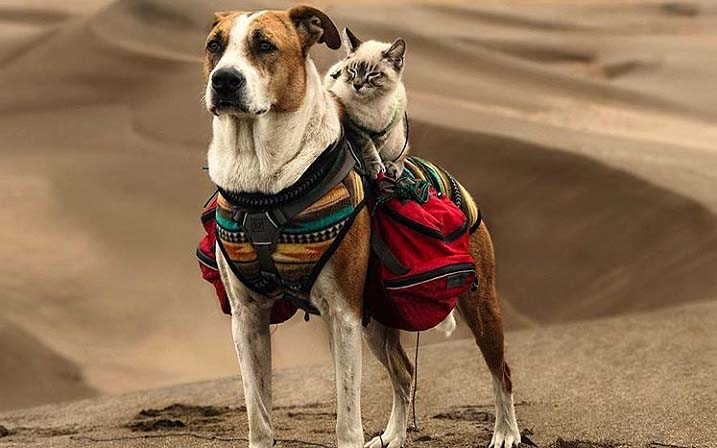 The Dodo Cat And Dog