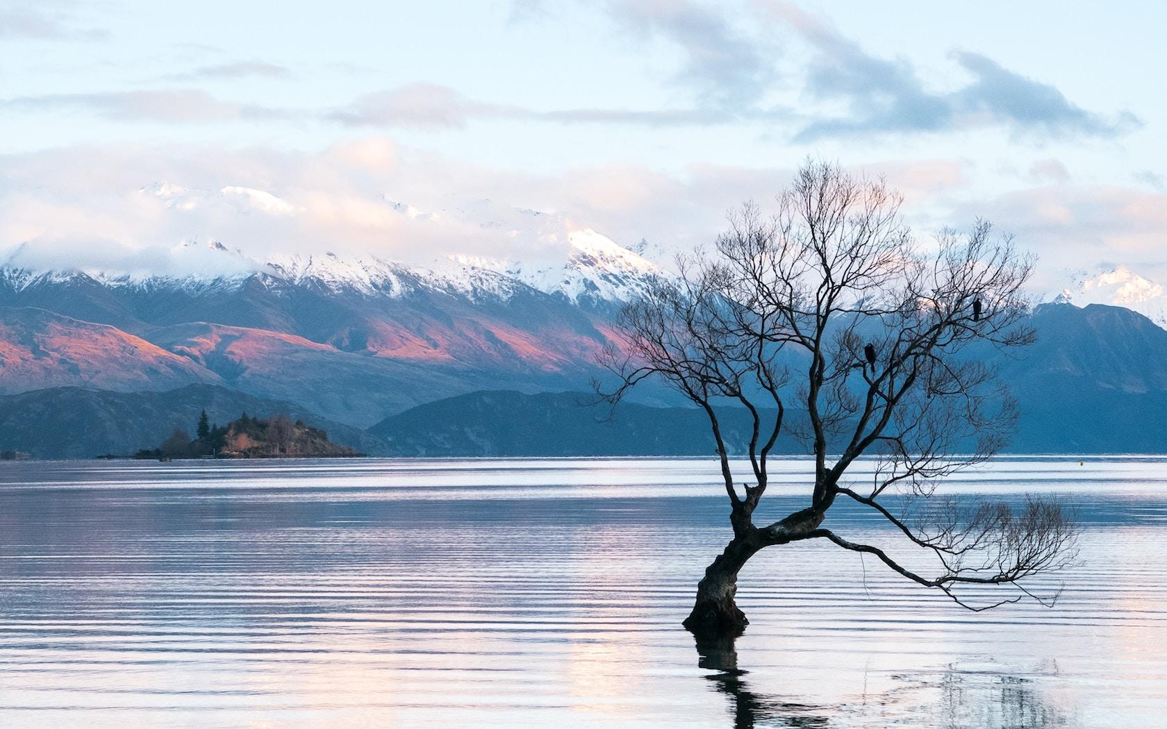 Local Council Asks Tourist To Stop Climbing New Zealand's Famous 'Wanaka  Tree'