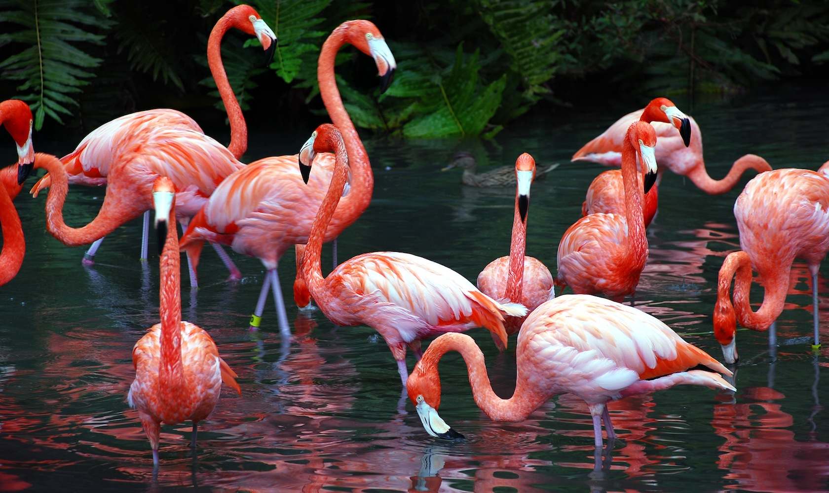 this bahamas baha mar needs someone to look after its flamingos