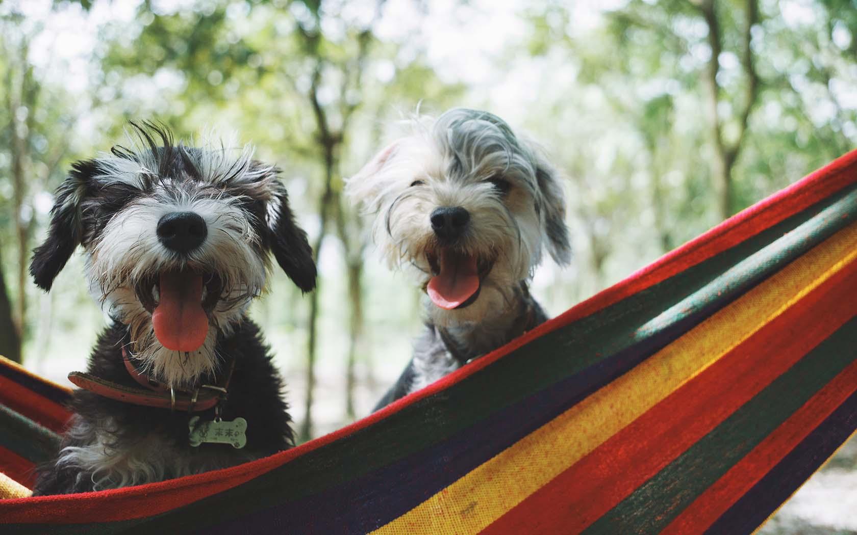 Pet-Friendly Accommodation From Around Australia