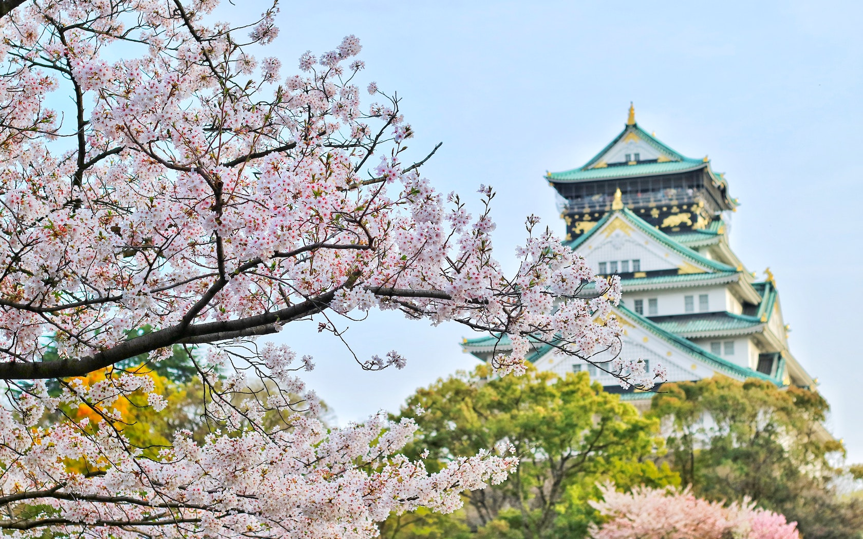 b52208c05caba The annual blooming of the sakura flower, otherwise known as the cherry  blossom, is a big deal in Japan. To help you catch a glimpse of these  flowers, ...