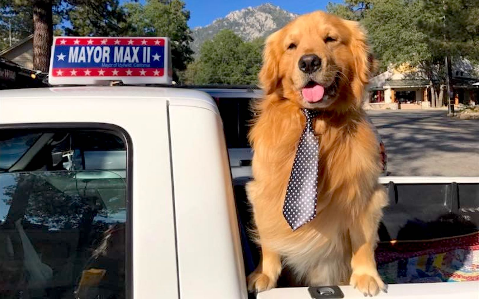 Image result for mayor max dog