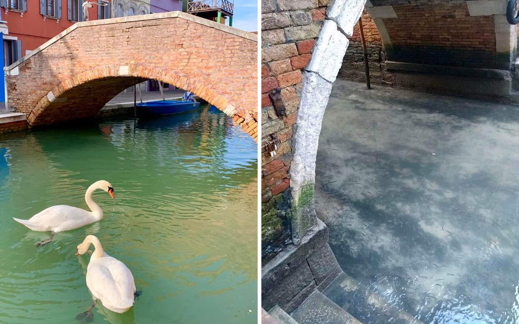 Coronavirus Lockdown: Venice Locals Share Photos Of Clear Canals